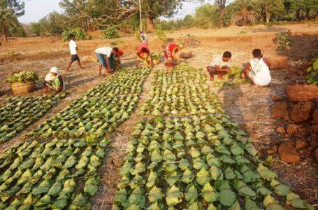 शहीद महेन्द्र कर्मा तेन्दूपत्ता सामाजिक सुरक्षा योजना