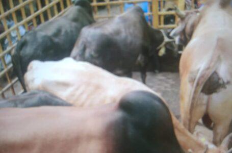 नगर निगम रायपुर का रोका छेका अभियान